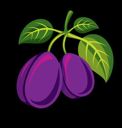 Two purple simple plums with green leaves ripe vector