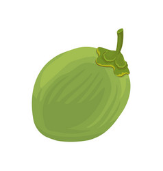 whole young green coconut flat icon of vector image