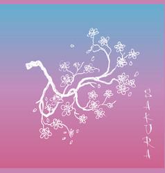 sakura japanese cherry branch with flowers vector image