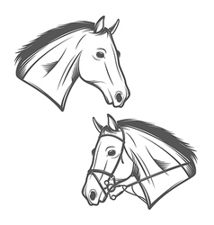 Horse head isolated on white background vector image vector image