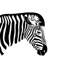zebra head on a white background wild animals vector image vector image