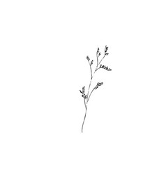 Dried flowers dry grass on a white background vector