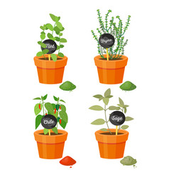 Fragrant plants used in culinary grown in pots vector