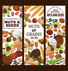Kernels and nuts cereal grains seeds vector