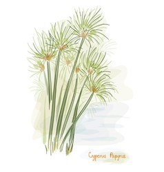 papyrus plant watercolor style vector image