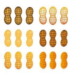 Peanut in shell icon set cartoon vector