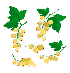 set of cartoon white currant berries isolated on vector image