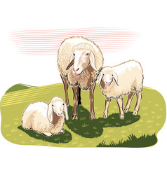 Sheep and lambs in the countryside vector