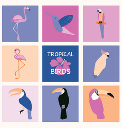 hand drawn tropical set of birds vector image