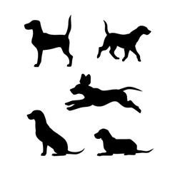 Breed of a dog beagle silhouettes vector image vector image