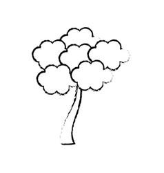 sketch tree sakura japanese flora vector image