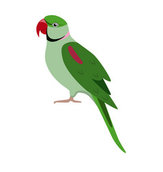 Alexandrine parrot icon in flat style vector