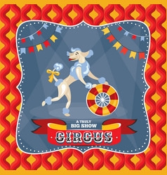 Circus card with a poodle vector