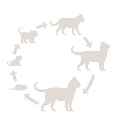 Round stages cat growth silhouette set from vector