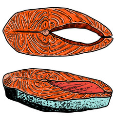 set salmon meat cuts in engraving style vector image