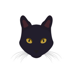 black cat with yellow eyes black cat vector image