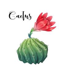 Cactus in desert and hand vector