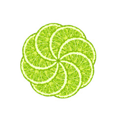 Round from lime slice citrus vector
