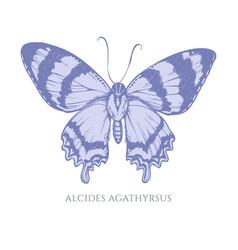 Set hand drawn pastel alcides agathyrsus vector