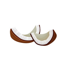 two broken pieces of coconut tropical fruit vector image