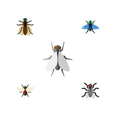 Flat icon fly set of hum dung mosquito and other vector