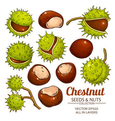 Chestnut set isolated on white background vector