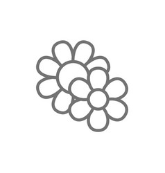 field flowers line icon isolated on white vector image