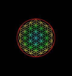 flower life yantra mandala sacred geometry vector image