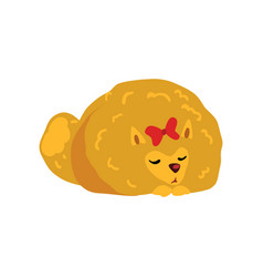 Pomeranian spitz dog character sleeping on the vector