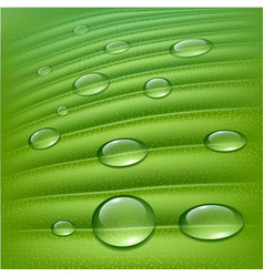 water drops on fresh green vector image