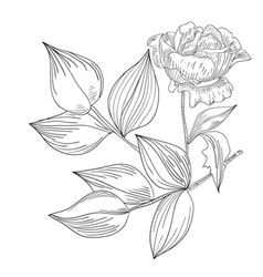Decorative Rose flowers vector image vector image