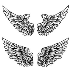 set of the eagle wings isolated on white vector image vector image