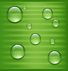 water drops on green leaf vector image