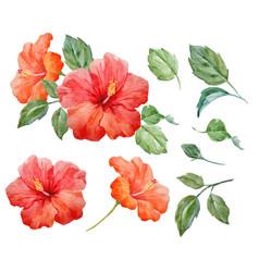 Watercolor tropical hibiscus flower vector