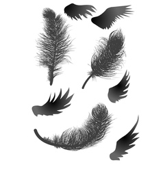 black feathers and wings vector image vector image