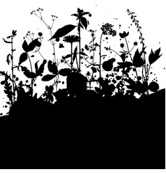 background with drawing herbs and flowers vector image