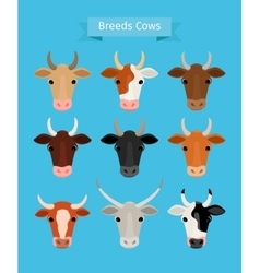Cow heads set vector