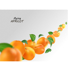 Creative concept with flying apricots and leaves vector