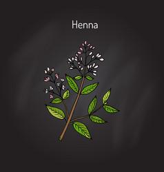 Henna or hina vector