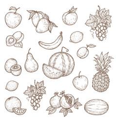 tropical farm and garden fruits sketch vector image