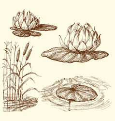water lily and water plants set vector image