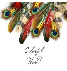 Art background with colorful feathers vector