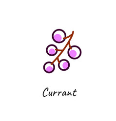 black currant outline icon on white vector image