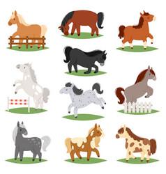 Cartoon horse cute animal horse-breeding vector