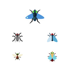 Flat icon fly set of bluebottle dung gnat and vector