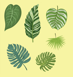Tropical leaves summer green exotic jungle palm vector