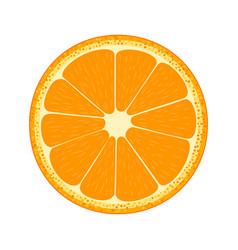 half of fruit orange vector image