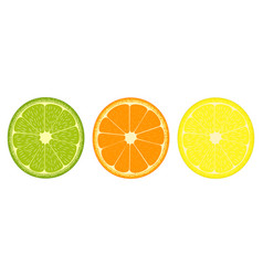 citrus fruit slices icon vector image