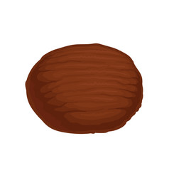 flat icon of whole brown coconut natural vector image
