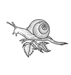 snail animal sketch engraving vector image